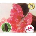フィンガーライム (赤・ピンク系) 13.5cmポット苗(地上部約50cm)