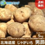 【2021年/予約】新じゃが じゃがいも 北海道産 男爵いも 5kg ジャガイモ 馬鈴薯 越冬 北海道 応援 支援 食品 グルメ 野菜 お取り寄せ