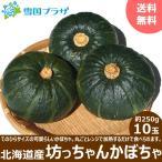 【出荷中】 越冬 かぼちゃ 北海道産 坊ちゃんかぼちゃ 250g×10玉 カボチャ 南瓜 北海道 お取り寄せ