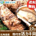 北海道産 カキ 殻付き 活牡蠣貝 10枚 かき 牡蠣 活貝 ギフト 贈り物 北海道 物産展 応援 支援 食品 グルメ お取り寄せ