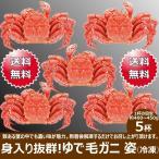 毛がに ボイル 5杯 姿 400g〜450g前後 送料無料 毛ガニ カニ 蟹 お祝い 贈り物 北海道 物産展 応援 支援 食品 グルメ お取り寄せ