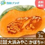 【出荷中】越冬 かぼちゃ 北海道産 大浜みやこ 1.2kg×3玉 カボチャ 南瓜 北海道 お取り寄せ