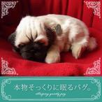 【本物そっくりに眠るパグのぬいぐるみ】クリスマス|誕生日|プレゼント|ギフト|お見舞い