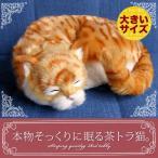 Yahoo!ニニアンドキノ Yahoo!店新商品《受注開始》6月5日から順次出荷予定です。【本物そっくりに眠る茶トラ猫(大)のぬいぐるみ】誕生日|プレゼント|ギフト|ペット|クリスマス|