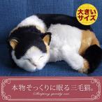Yahoo!ニニアンドキノ Yahoo!店新商品《受注開始》6月5日から順次出荷予定です。【本物そっくりに眠る三毛猫(大)のぬいぐるみ】誕生日|プレゼント|ギフト|ペット|クリスマス|お祝い|お見舞い