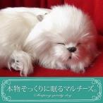パーフェクトペット マルチーズ ぬいぐるみ / 本物 そっくり リアル ペット メモリアル 犬 いぬ イヌ