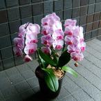 開店祝い 誕生日 お祝い プレゼント 中輪 ピンク 胡蝶蘭 花 ギフト 人気 ランキング 開店祝い、お祝い、記念日