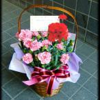 母の日 プレゼント41  開店祝いバスケット ピンク 5号鉢 人気ランキング プレゼント