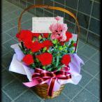 母の日 プレゼント66  開店祝いバスケット レッド 5号鉢 人気ランキング プレゼント