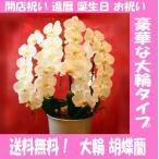 胡蝶蘭 お祝い お花 還暦祝い ファレノプシス 送別 卒業 プレゼント