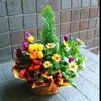 お祝い 開店祝い 誕生日 プレゼント 花 人気ランキング上位 おまかせプランツバスケット2 花 プレゼントなどに 条件付き送料無料 母の日
