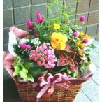 お祝い 開店祝い 誕生日 プレゼント 花 人気ランキング おまかせプランツバスケット11 花 プレゼントなどに 条件付き送料無料 母の日