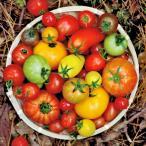 プティリサ・ジュエルボックス ミニトマト 詰め合わせ 700g トマト 高糖度 野菜 国産 高知県産 高知 おかざき農園