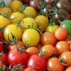 リサ・ミニトマト ご家庭用カラーミニトマト アソート 約1kg トマト 高糖度 野菜 国産 高知県産 高知 おかざき農園