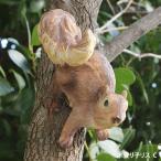 木登り子リスのオーナメント C