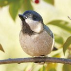 ショッピングオーナメント 小鳥クリップガーデンオーナメント -白- (置物 オーナメント 庭 かわいい 鳥 野鳥 動物 オブジェ ガーデニング 飾り)