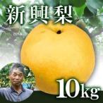 新興梨10kg箱(生産者・片山)