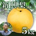 新興梨5kg箱(生産者・片山)