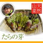 【2021年予約】天然山菜 たらの芽 300g(採取者・笠原)]4月中旬頃から配送予定 送料無料 新潟