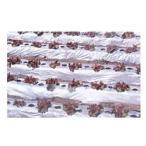 農業用マルチシート 国産オリジナル シルバーマルチ 厚さ0.02mmX幅95cmX長さ200m(無孔)