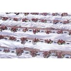 農業用マルチシート 国産オリジナルシルバーマルチ 厚さ0.02mmX幅150cmX長さ200m(無孔)直送品