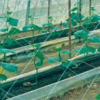 キュウリネット  白緑  24cm目×幅135cm×長さ36m