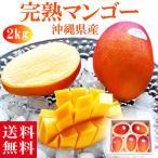父の日 ギフト プレゼント マンゴー 約2kg(4〜6玉) 沖縄 ふるさと 産直 送料無料 お中元 果物 くだもの フルーツ 贈答 贈り物 贈物 進上