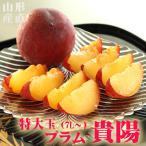 すもも 貴陽 特大玉 7L以上×6玉 約1.2kg 送料無料 山形 プレミアム プラム スモモ 果物 くだもの 高級 フルーツ ギフト