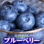 父の日 ギフト プレゼント ブルーベリー 送料無料 無農薬 自然栽培 約1kg(約500g×2Pacs) フルーツ 果物 くだもの お中元 贈答 栃木 ふるさと 産直