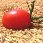 (予約販売)アイコ(ミニトマト) 3kg 熊本県産 送料別/ 嘉島町 藤瀬さんのトマト