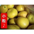 パール柑 (小粒) 約10kg 送料別 熊本県産/中山さんの文旦(パール柑)