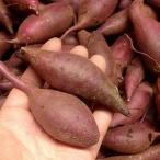 紅はるか ミニサイズ(2S-3S) 2kg 熊本県産 送料別/ 益城町 西村さんのさつま芋