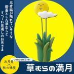 デコレ DECOLE  草むらの満月 グリーン 4.0 2.8 h10.3 ZTM-92356