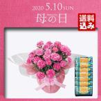 母の日 プレゼント ギフト 早割 母の日ギフト 2020 送料無料 花 花鉢 スイーツ シュガーバターサンドの木とピンクカーネーション 鉢植え5号