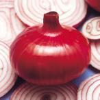 玉葱苗 赤タマネギ 東京レッド(武蔵野種苗園)20本  レビューを書いてタマネギマルチおまけ付