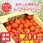 【送料無料】【規格外品】今話題のミニトマト★北海道名寄産訳ありトマトベリー【規格外・サイズ不揃い】 約1.5kg入 ※7月下旬以降収穫後のお届けとなります。