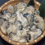 殻付!能登中島名産牡蠣 1斗缶 なんと鮮度一番です!牡蠣ナイフ付き!