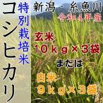 セール 米 新潟 コシヒカリ 30kg 令和2年  玄米 白米 農家直送 糸魚川 能生米 送料無料 小分け お米
