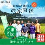 セール 米  お米 新潟 コシヒカリ 玄米 5kg 農家直送 令和2年産 糸魚川 能生米 送料無料