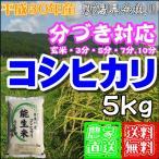 分づき 新米 5kg 新潟産糸魚川 コシヒカリ 能生米 農家直送 29年産 送料無料