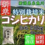 新米 特別栽培米 20kg白米 新潟産糸魚川 コシヒカリ 能生米 農家直送 送料無料