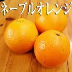 わけあり不揃いネーブルオレンジ 訳あり(和歌山県産) 5キロ 柑橘