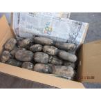岩国蓮根(れんこん)10kg箱