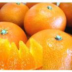 紅まどんな 訳あり 家庭用 約 10kg 愛媛県産 紅マドンナ 送料無料 お歳暮