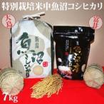 令和元年新米 極上味わい彩セット 特別栽培米中魚沼産コシヒカリ7kg