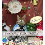 わーるどぽけっと 猫用 キャットフード シニア猫ちゃん応援混ぜ混ぜセット 1個 セール