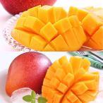旬 フルーツ 百貨店 完熟マンゴー&太陽のタマゴ食べ比べセット【離島を除く本州のみのお届け】
