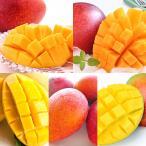 旬 フルーツ 百貨店 たっぷりマンゴー食べ比べセット【離島を除く本州のみのお届け】