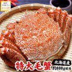 北海道産 毛ガニ 毛蟹 毛がに 特大 1尾 約800g前後(送料無料)