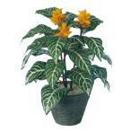 観葉植物 人工 樹木 ダニア 高さ400mm Pサイズ 鉢:PラウンドS(BK)